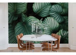 Fototapet premium, model 3d, Frunze verzi luxuriante Beetle Valley, dimensiuni pe comanda